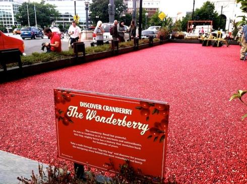 2013-10-8-CranberryBog